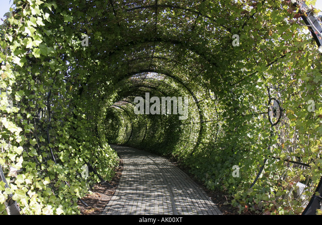 Alnwick England UK The Alnwick Garden The Poison Garden tunnel - Stock Image