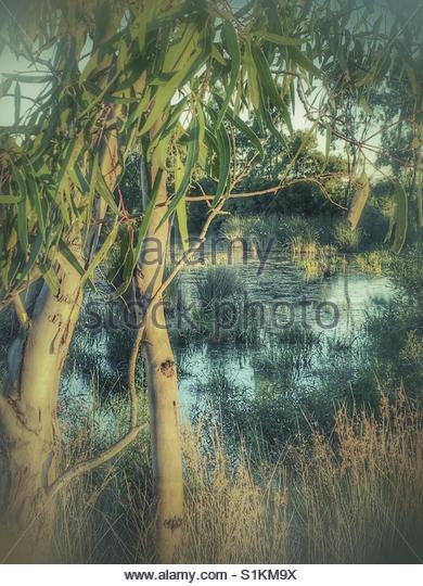 silent Pond' - Stock Image