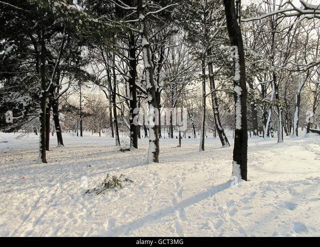 Snowy trees with shadows in the snow at dusk in Prospect Park, Brooklyn. - Stock Image