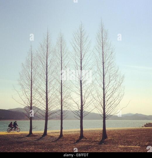 Couple cycling by trees - Stock Image