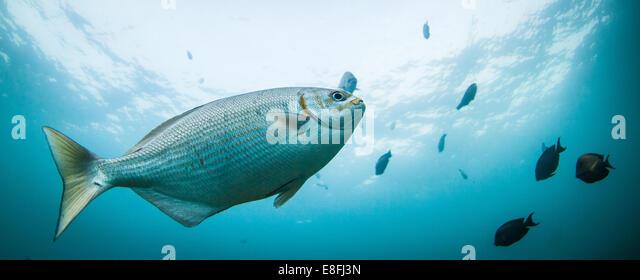 Fish swimming underwater - Stock Image