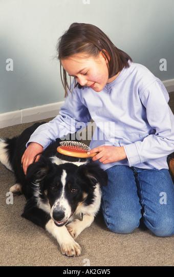 girl grooming a dog - Stock Image