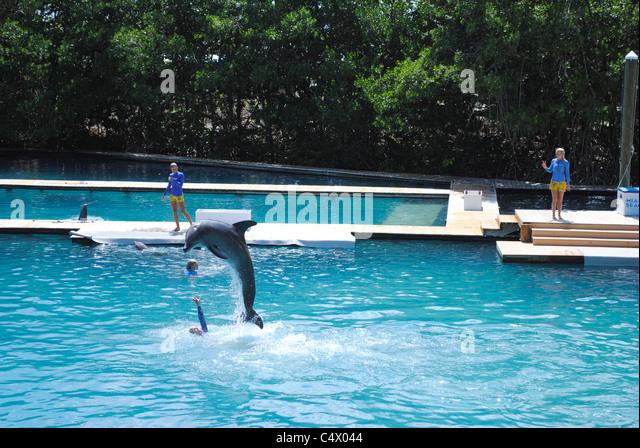 Miami Dolphin Stock Photos Amp Miami Dolphin Stock Images