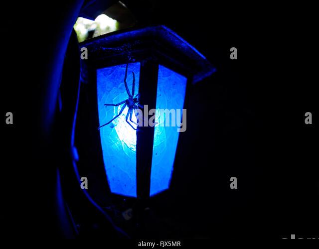 Close-Up Of Spider On Illuminated Lamp At Night - Stock Image