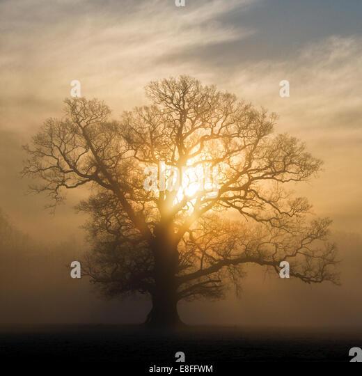 Sunlight through tree in park, Berkshire, England, UK - Stock Image