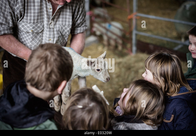 Children and new-born lambs in a lambing shed. - Stock-Bilder