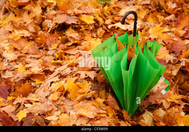 Combined green umbrella in autumn park lies on layer of the yellow fallen down maple leaves. - Stock Image
