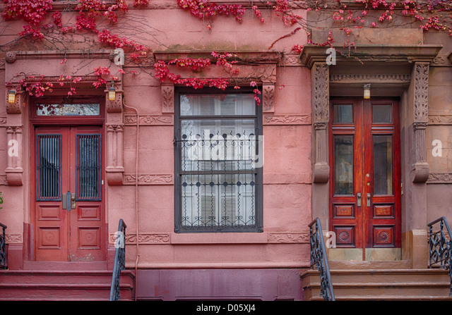 Row House doors  with pink ivy, Harlem, New York, USA - Stock Image