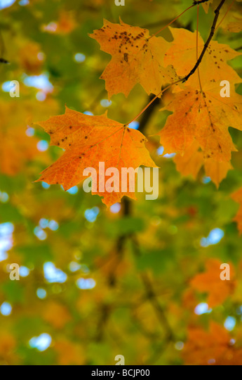 USA, Connecticut, Lake Waramaug - Stock Image