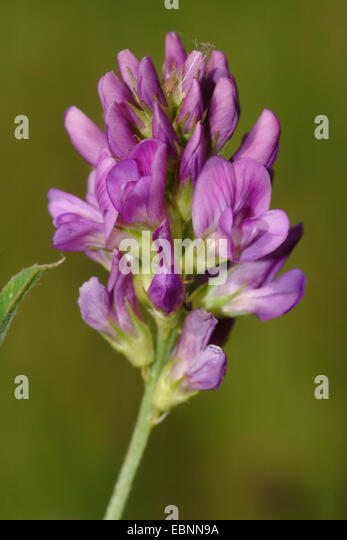 luzerne mature singles Luzerne county luzerne-wyoming  progesterone is a female hormone produced by the ovaries during release of a mature egg from an ovary (ovulation) progesterone .