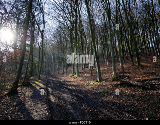 Winter woodland and bridlepath in the South Downs National Park near Ditchling Beacon, Sussex, UK - Stock Image