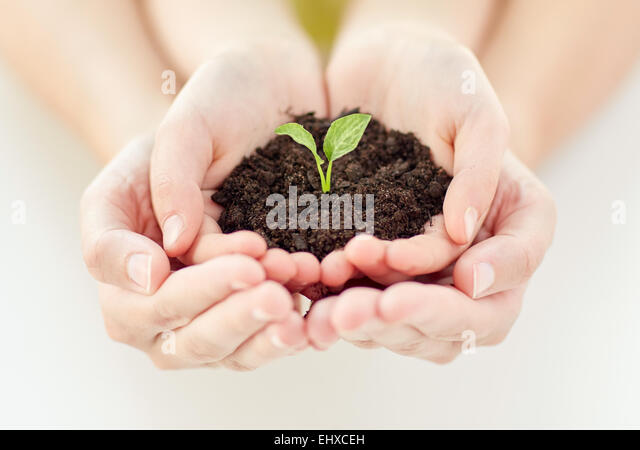 close up of child and parent hands holding sprout - Stock Image