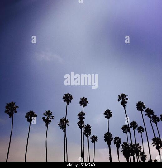 A row of palm trees. Santa Barbara, California USA. - Stock Image