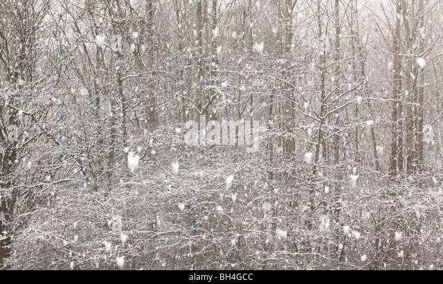 Snowing in the forest. - Stock Image