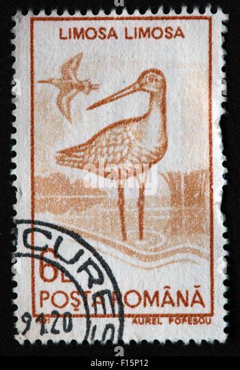1991 Posta Romana Limosa Limosa bird Egret Aurel Popescu Stamp - Stock Image