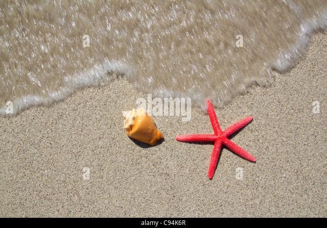 beach starfish and seashell with wave coming to shore - Stock-Bilder