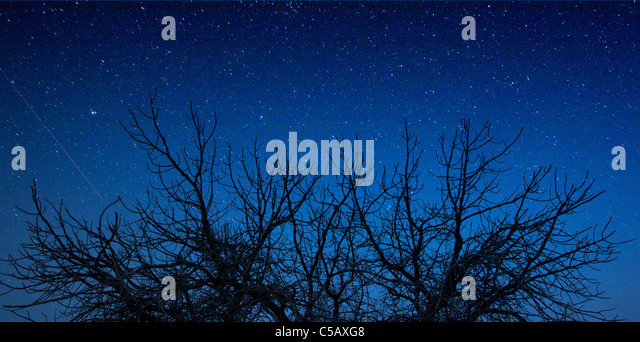 Dead tree silhouetted against a dawn sky. - Stock Image