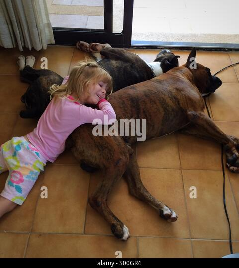 Little girl relaxing on a Sunday afternoon with her boxer bread dogs - Stock Image