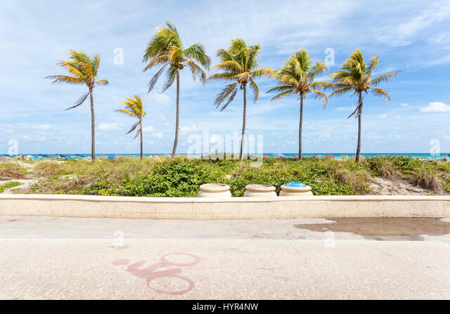 Palm trees at the Hollywood each broadwalk. Florida, United States - Stock Image