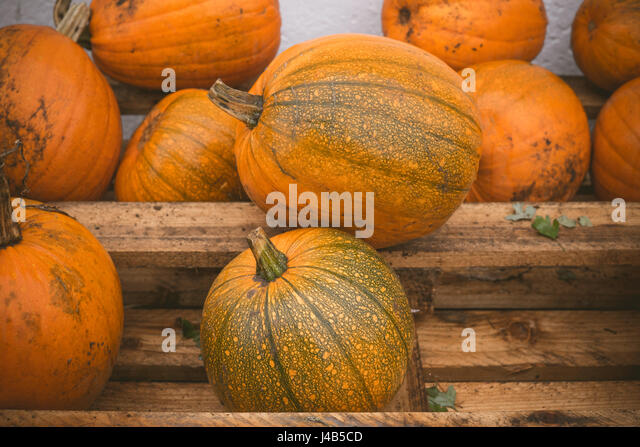 Orange pumpkins stacked on a wooden shelf at a festival - Stock Image