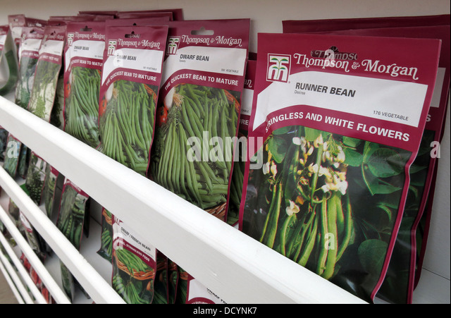 Runner Bean Thompson & Morgan Garden Allotment Seed packets in garden centre / supermarket, now popular again - Stock Image