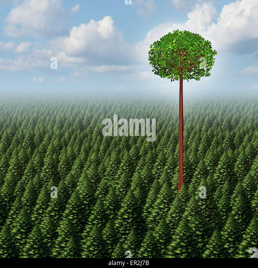 Stand out from the crowd concept as a forest of evergreen trees with a successful leaf tree standing high above - Stock Image