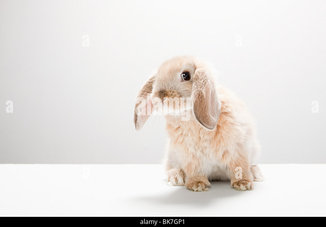 Portrait of a rabbit - Stock Image