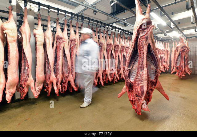 Sides of pork in cold store of a slaughterhouse - Stock-Bilder
