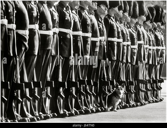 Farewell parade for Rats the Corgi dog, mascot of the !st Battalion Welsh Guards, at Pirbright Barracks in 1980. - Stock Image