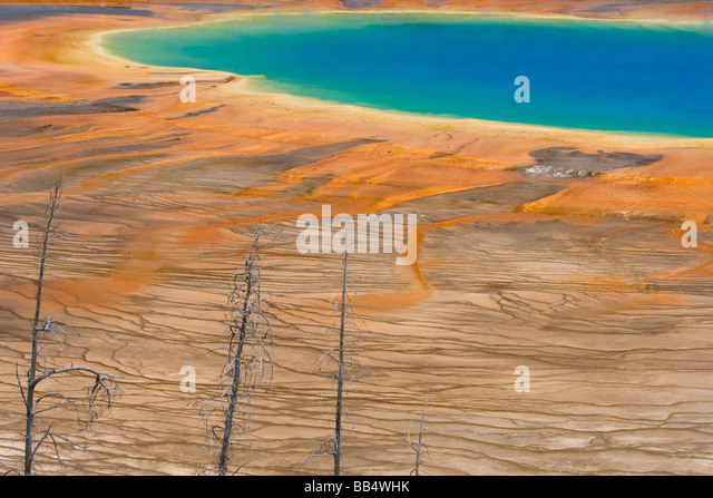 USA, Wyoming, Yellowstone National Park. Colors and patterns of the Grand Prismatic Spring with dead trees in foreground. - Stock Image