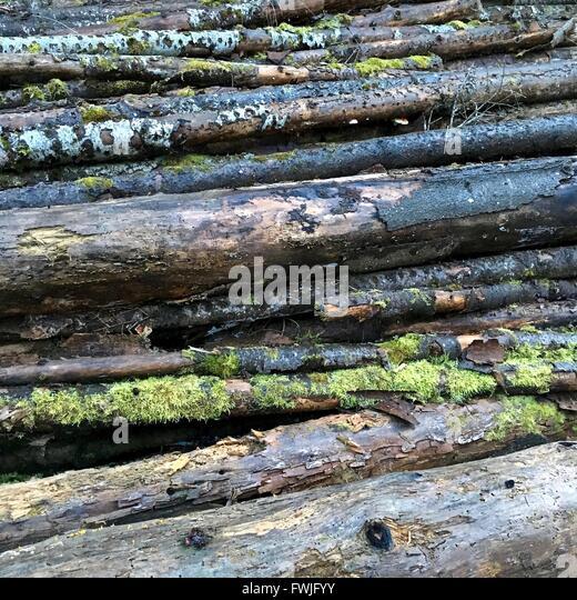 Full Frame Shot Of Logs - Stock-Bilder