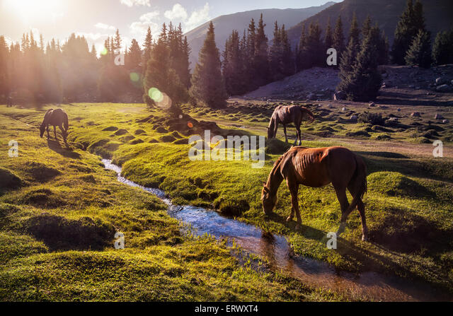 Horses in the Gregory gorge mountains of Kyrgyzstan, Central Asia - Stock Image