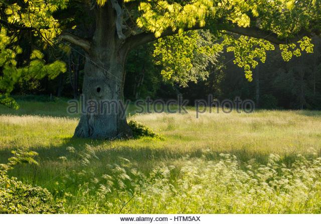 Summer on the Sherborne Estate, Dorset, England, UK - Stock-Bilder