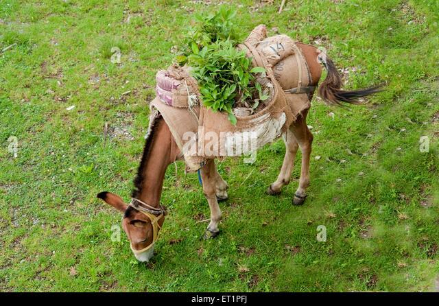 goods india stock photos  u0026 goods india stock images