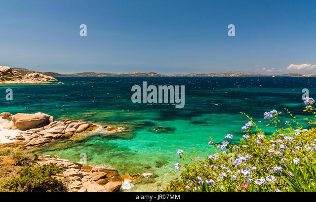Wonderful azure seas and blue flowers around Baya Sardinia, Italy - Stock Image