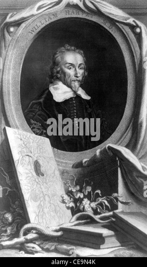 William Harvey, English physician - Stock Image