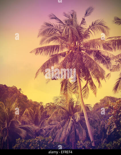 Vintage faded nature background, palms at sunset. - Stock-Bilder