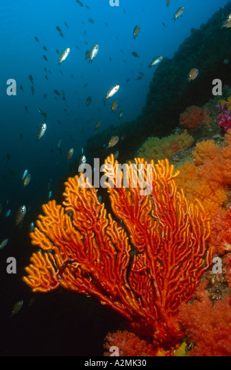 colorful reef in Korea - Stock Image