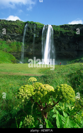Iceland Seljalandsfoss Waterfall in the South - Stock Image