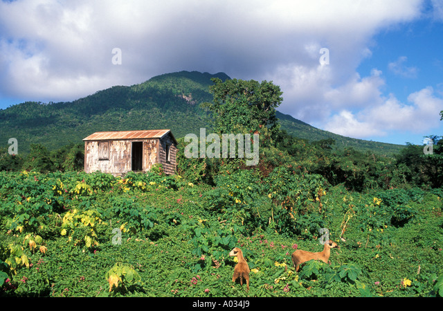 Nevis Mount Nevis peak old abandoned home - Stock Image