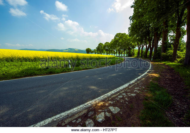 Tarmac dwindling road, popular with bikers. Yellow rapeseed field and tree alley. - Stock Image