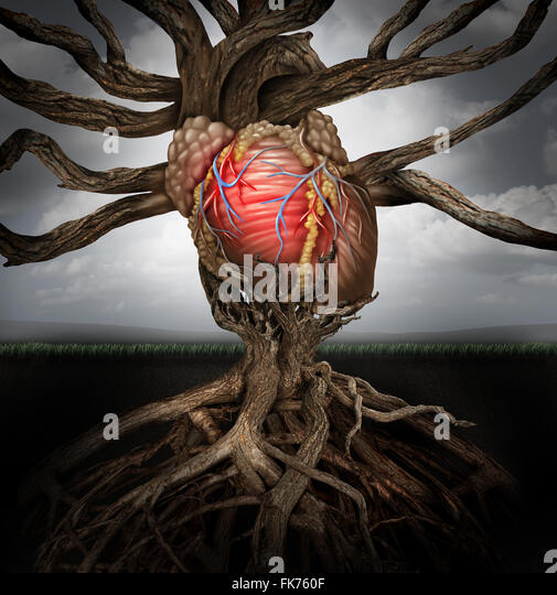Human heart health concept as a symbol for growing a body organ and the veins and arteries of the circulatory system - Stock Image