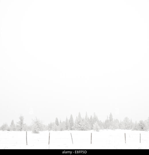 USA, Wyoming, Albany County, Laramie, Snow covered forest - Stock Image