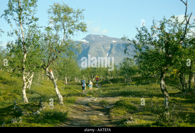 Trekking party in a birch wood near the Kisuris hut, Sarek National Park, Lappland, Norrbottens Län, arctic - Stock Image