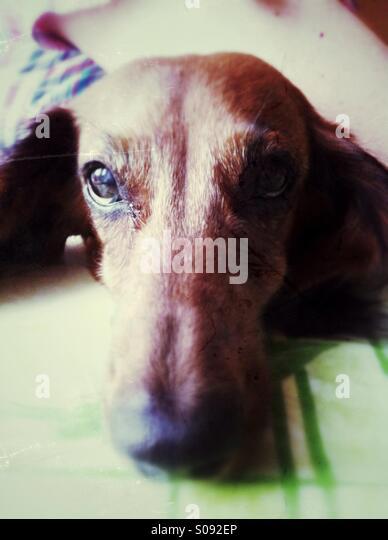 Cute dog portrait - Stock-Bilder
