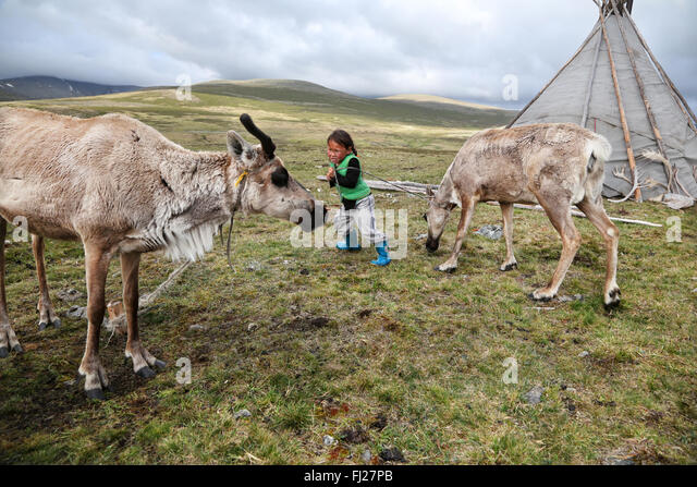 Mongolia Tsaatan nomads - reindeer people -  tribe -  people living with reindeer in Central Asia - Stock Image