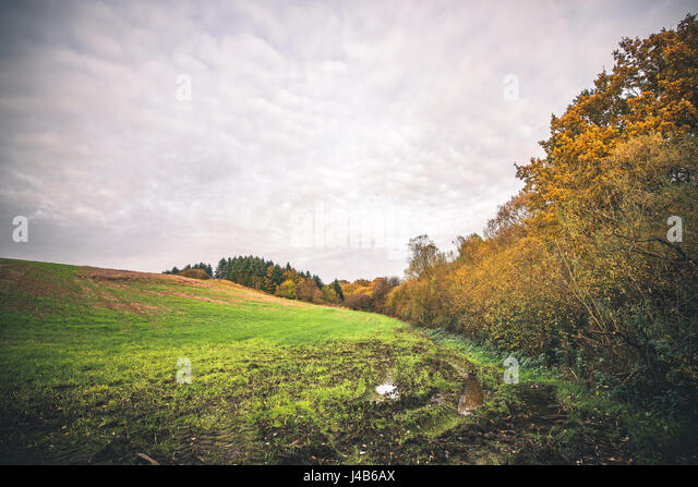 Muddy field with a puddle in the fall in a rural environment with colorful trees in golden autumn colors - Stock Image