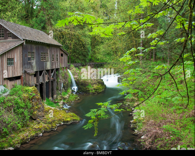 Clark County, WA Cedar Creek Grist Mill (1876) surrounded by spring forest green - Stock Image