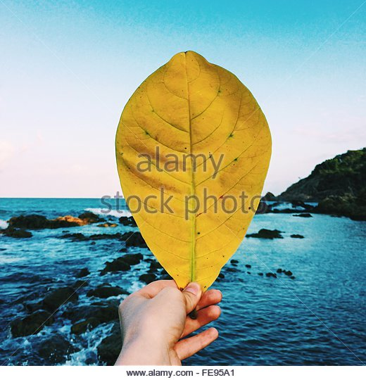 Man Holding Yellow Leaf By Sea - Stock Image