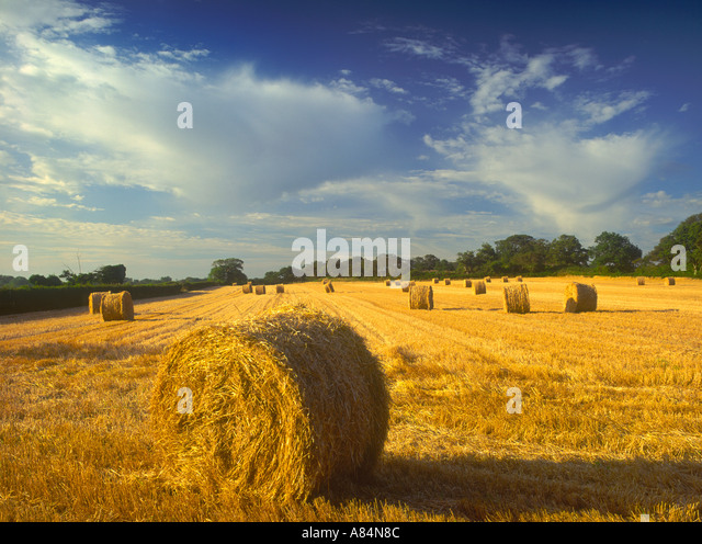 Straw bales near Bury St Edmunds in Suffolk England UK - Stock Image
